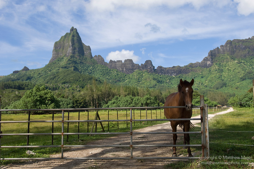 Moorea, French Polynesia; horses on ranch off the road to Belvedere overlook , Copyright © Matthew Meier, matthewmeierphoto.com All Rights Reserved