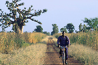 Mali. Province of Segou. Zambougou. In the late afternoon, a man rides his bicycle on a dirt road near millet's fields which are ready for harvesting. © 2003 Didier Ruef