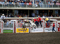 Rodeo Cowboy riding Bucking Horse in Bareback Riding Event at Calgary Stampede, Calgary, Alberta, Canada - Editorial Use Only