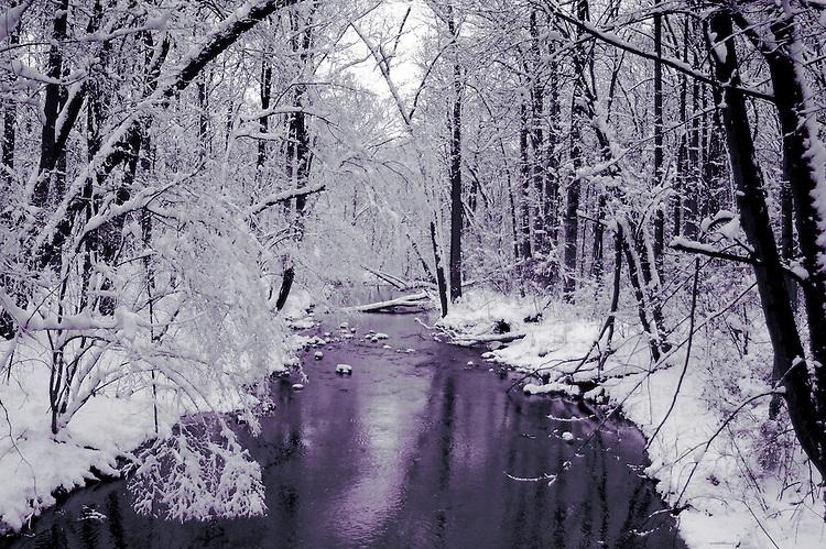 A winter scene in woodland
