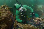 LA Waterkeeper diver removes urchins from urchin barren for relocation for kelp restoration.