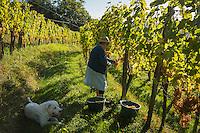 Vignoble de Jurançon  / Jurançon vineyard