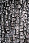 Bark of alligator juniper (Juniperus deppeana), Sitgreaves National Forest, Arizona
