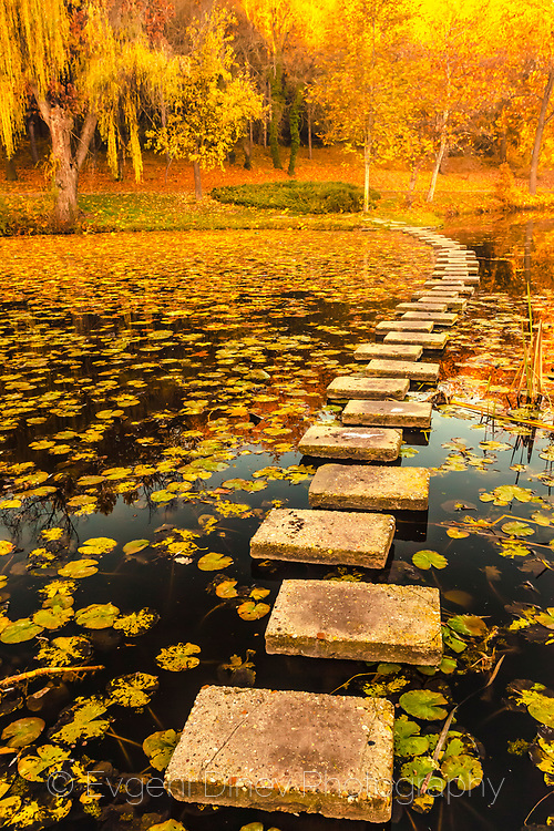 Stepping stones in a small lake