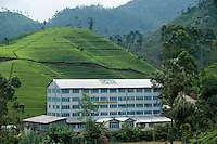 Sri Lanka. Torrington Tea Factory. Agarapatana.