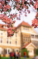 A crab apple tree blooms in front of Hiram Smith Hall during spring.<br /> <br /> Client: University of Wisconsin-Madison<br /> &copy; UW-Madison University Communications 608-262-0067<br /> Photo by: Michael Forster Rothbart<br /> Date:  2002     File#:   color slide