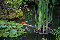 Koi ponds are ponds used as part of a landscape pond garden.  Classic koi ponds have Nishikigoi  Japanese ornamental carps.<br />