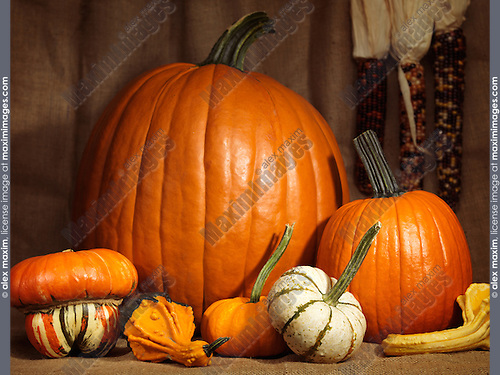 Pumpkins, gourds and indian corn artistic still life on burlap background