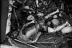 Body of young boy floats with debris of coconuts and banana tree trunks in and out with the tide after Cyclone Nargis struck the village of Nawpyando, Irrawaddy River Delta, Burma (Myanmar).  Unlike in Thailand in the aftermath of the Asian tsunami, there are no centers where victims' bodies were gathered for families to seek out family members.  Bodies were not collected at all in this area of the Irrawaddy River Delta.