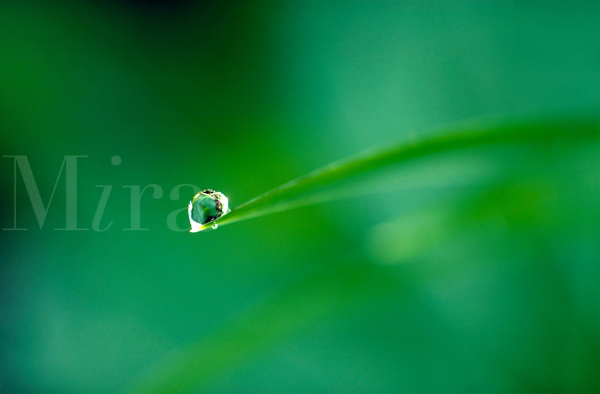 Dewdrop glistens atop a single blade of grass.