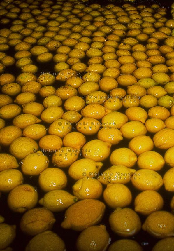 Processing of lemon fruits after harvest.<br /> Lavorazione dei limoni dopo la raccolta.