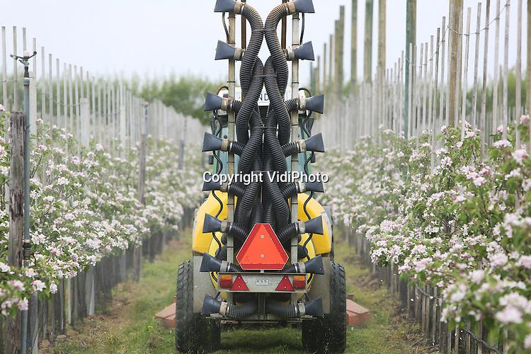 Foto: VidiPhoto<br /> <br /> RANDWIJK - Bij Praktijkonderzoek Plant &amp; Omgeving PPO in Randwijk wordt dinsdag de bloesem van appelbomen gedund met een spuitmachine.