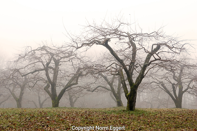 Apple Trees in Late Fall