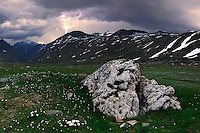 A mighty thunderstorm with lightnings at Pian del Nivolet in the Gran Paradiso National Park, Italy. The daisies and other wildflower dotting the prairies makes an interesting contrast with the ominous stormy sky. Taken at the end of June, stitched from four vertical frames