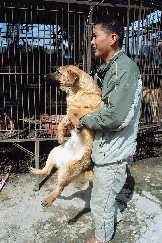 Korea. South Korea. Kimje area. Wonpyong. Dog market for dog meat. Worker carries in his arms a  dog just bought and transfers it to another cage on the retailer's car. Dog sale. Dog meat is a delicatessen of korean traditionnal cooking. &copy; 2002 Didier Ruef