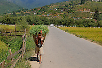 A young field worker carrying grass in a bucket at Paro. Arindam Mukherjee..