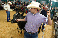 FFA student Austin Speck, 17, from Pe Ell, Wash. guides his steer, Lazy 5 California Chrome, out of the auction ring  during the final day of the Northwest Junior Livestock Show at the Washington State Spring Fair in Puyallup, Wash. on April 19, 2015.  Speck won his class for heifers born Jan. 1 - Feb. 29, 2014. He has raised Lazy 5 since the steer was five months old. (photo © Karen Ducey Photography)