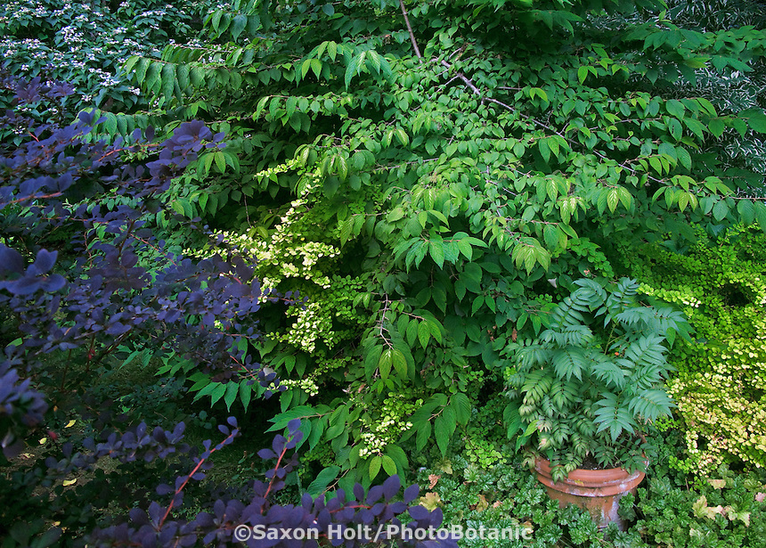 Foliage tapestry with pot focal point in shrub border of Beth Hansen garden,