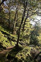 Footpath at Aira Beck in the Lake District, England, United Kingdom
