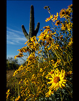 Landscape Images from Arizona, Cactus, desert, flowers, aspen, fall, autumn, mountains Flagstaff, Sedona, Oak Creek, red rock, clouds, forest, Grand Canyon, nature, Saguaro