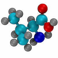 Computer-generated three-dimensional ball and stick model of the amino acid valine. Carbon atoms are shown in light blue, nitrogen in dark blue, hydrogen in gray, and oxygen in white.
