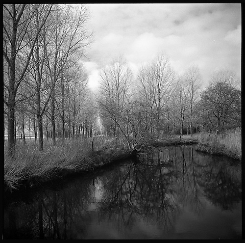 Alder Carr, Suffolk 2013 by Paul Cooklin