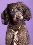 Last minute costume for halloween,  Flora the nerd dog.(Jodi Miller/Alive)