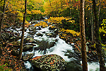 Autumn cascade along the Middle Prong of Little River, Tremont