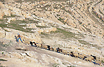 A shepherd leads his sheep up a hill outside Alqosh, Iraq.