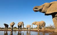 Africa Nature & Wildlife
