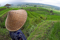 An Indonesian worker looks out over terraced Rice paddies in the interior of Bali, Indonesia.