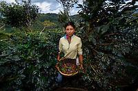Women picking coffee, Matagalpa, Nicaragua