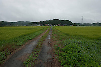 Landscape view of a road through a rice paddy field following the 311 Tohoku Tsunami in Ishinomaki, Japan  © LAN