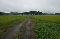 Landscape view of a road through a rice paddy field following the 311 Tohoku Tsunami in Ishinomaki, Japan  © LAN