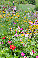 Old-fashioned heirloom flowers: Zinnias, Echinacea, Rudbeckia, cutting garden of perennials and annual flowers grown in masses