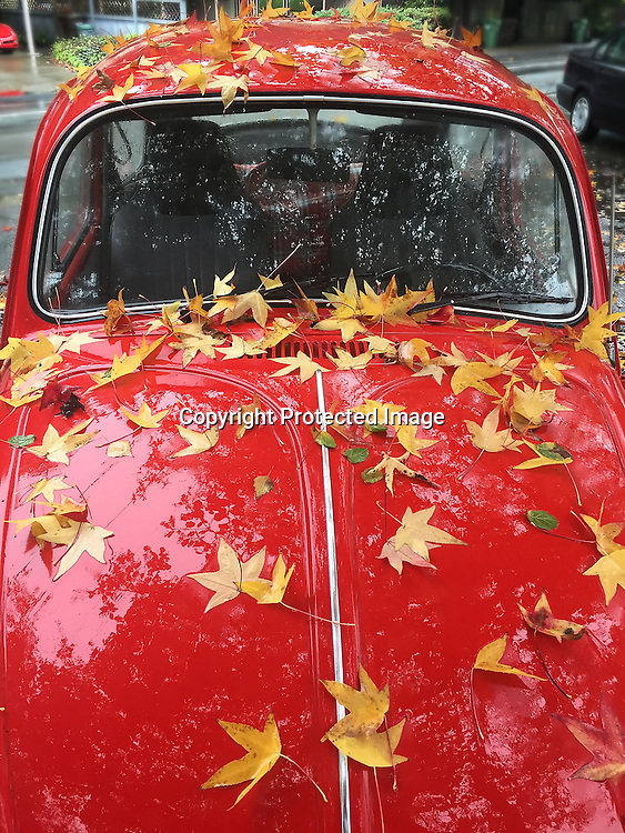 A Volkswagen bug cover in wet Autumn leafs, in Mill Valley, CA