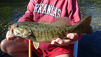 NWA Democrat-Gazette/FLIP PUTTHOFF <br /> Fishing for Elk River smallmouth bass slows down when the water cools. This 15-inch smallmouth was one of few caught        Nov. 11 2016 during the float trip.