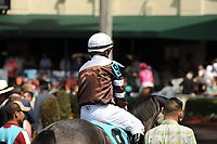 HALLANDALE BEACH, FL - APRIL 01: Taperge in the walking paddock with Javier Castellano aboard for the Sanibel Island Stakes on Florida Derby Day at Gulfstream Park on April 01, 2017 in Hallandale Beach, Florida. (Photo by Carson Dennis/Eclipse Sportswire/Getty Images)