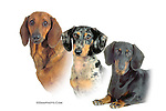 Dachshund triple head study, This design is offered on gift merchandise ONLY.<br />