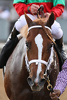 HOT SPRINGS, AR - March 18: Malagacy #6 after winning the Rebel Stakes at Oaklawn Park on March 18, 2017 in Hot Springs, AR. (Photo by Ciara Bowen/Eclipse Sportswire/Getty Images)
