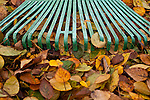 Green rake with Autumn leaves raking up yard close-up
