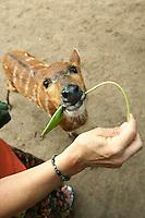 Feeding a deer.