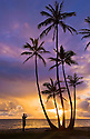 Coconut palm trees and man photographing sunrise at Punalu'u Beach Park, Windward Oahu, Hawaii.