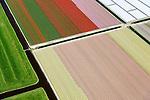 Nederland, Noord-Holland, gemeente Schagen, 20-04-2015;<br /> begin van de bloei van bloembollenveld in het voorjaar, omgeving Sint Maartensbrug. Kop van Noord-Holland, historisch gebied voor de teelt van bollen op geestgrond.<br /> [beeld geretoucheerd, details]<br /> <br /> Beginning of flowering bulbs field in spring.<br /> luchtfoto (toeslag op standard tarieven);<br /> aerial photo (additional fee required);<br /> copyright foto/photo Siebe Swart