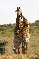 Amakhala Game Reserve, Eastern Cape, South Africa. Photo: Joli