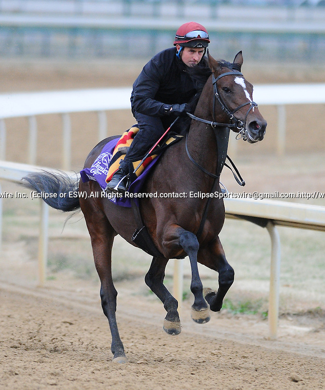 3 November 2010:  Master of Hounds, trained by Aidan P. O'Brien and to be ridden by jockey Johnny Murtagh, works out for the 2010 Breeders Cup at Churchill Downs in Louisville, Kentucky.(Scott Serio/Eclipse Sportswire)