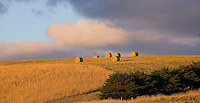 Round hay bales on skyline..Larger JPEG + TIFF images available by contacting use through our contact page at :..www.photography4business.com