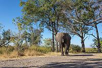 Meremi National Park, Botswana, Africa
