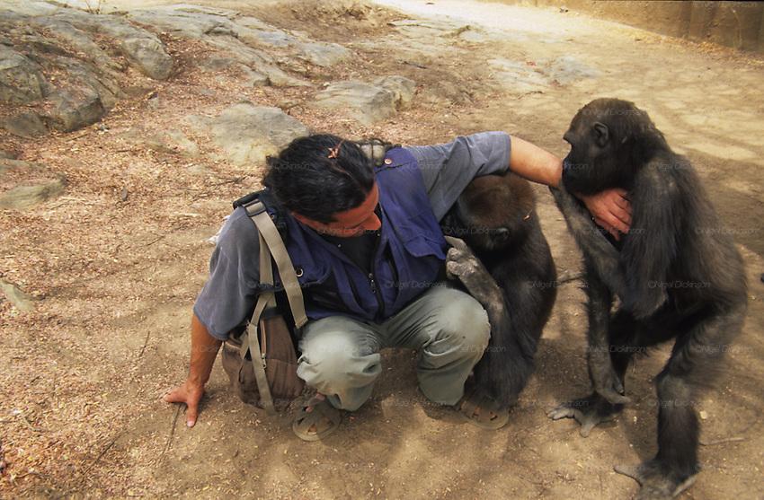 Animals Animists Gorillas Kano Nigel Dickinson