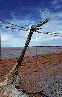 An Emu got caught in a fence line due to drought in Australia,it was trying to cross the land in search for food,South Australia